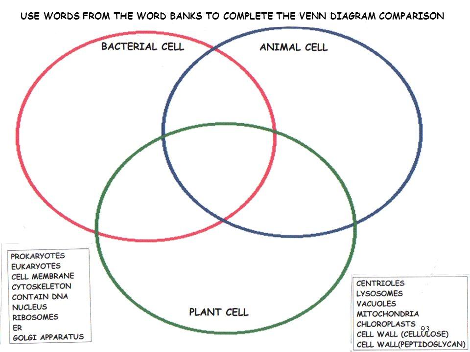Cell Vs Virus Venn Diagram Of Electrical Wiring Diagrams