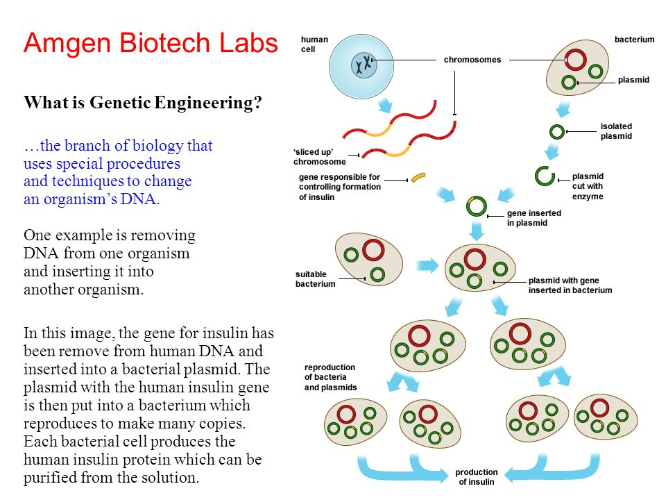 amgen lab key 1 And as executive vice president between january 1, 2016 and january 31,  2016  the hynes laboratory cloned and analyzed many of the key molecules .