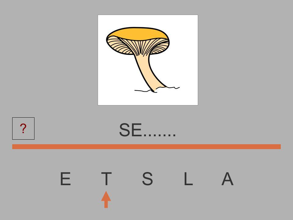 SE....... E T S L A