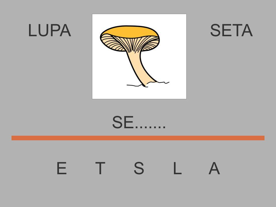 LUPA SETA SE....... E T S L A