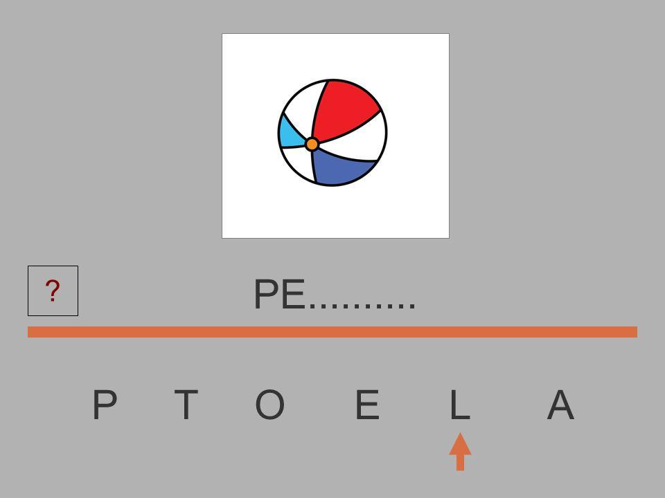 PE.......... P T O E L A