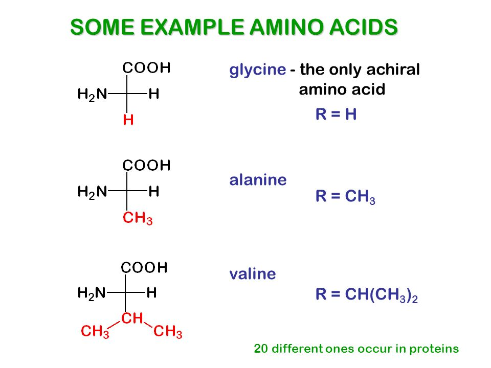 Amino Acid Definition and Examples