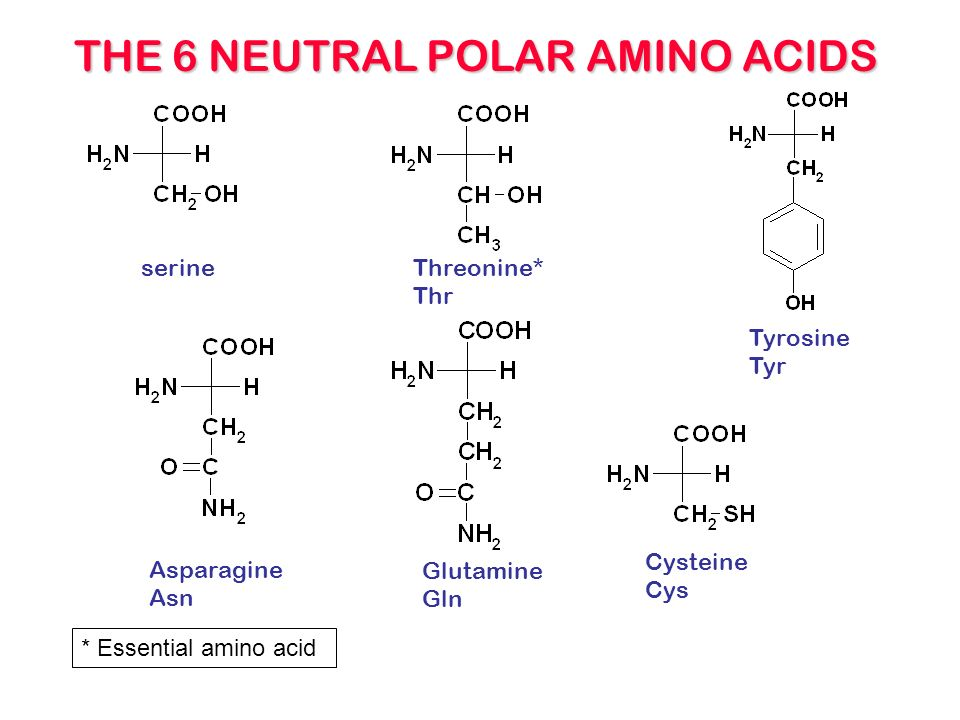 amino acids ppt video online download