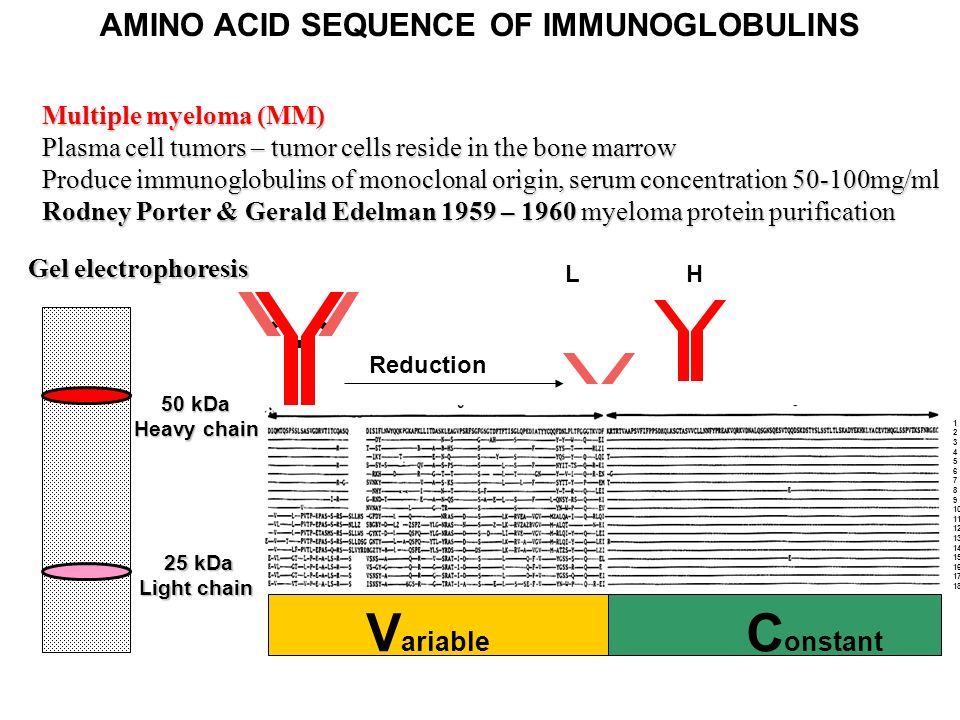 how to add amino acids to a protein sequence