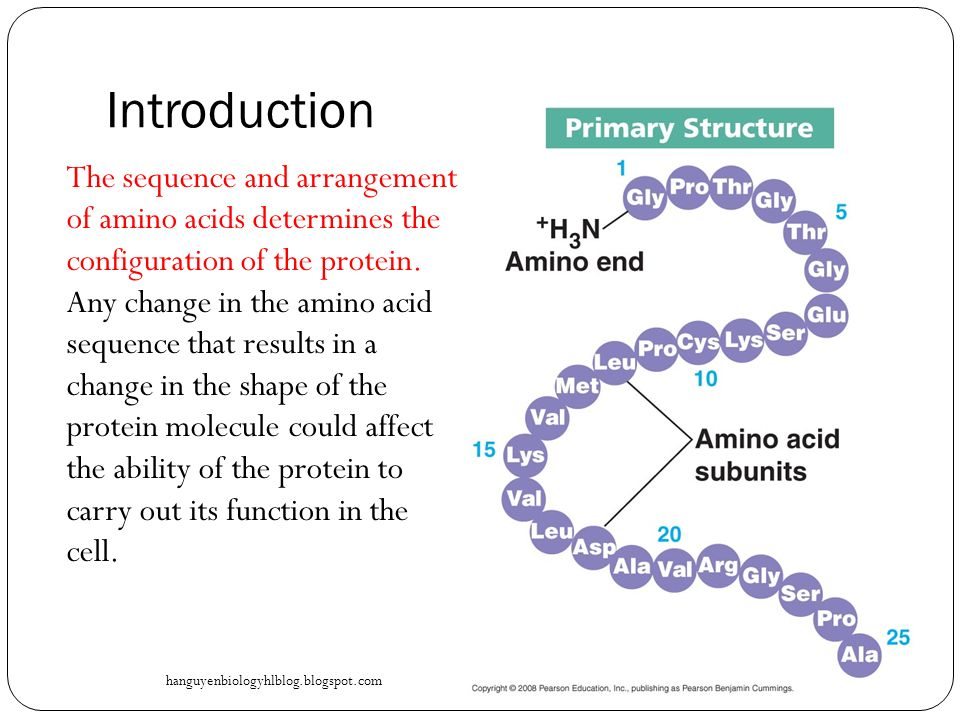 Blueprint of life topic 18 protein synthesis ppt video online 5 introduction malvernweather Choice Image
