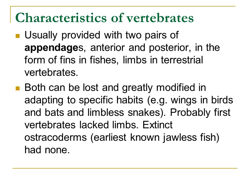 The hemichordates and chordates ppt video online download for Characteristics of fish