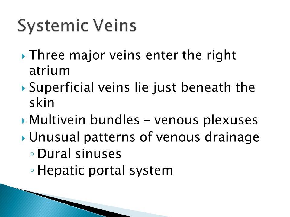 Systemic Veins Three major veins enter the right atrium