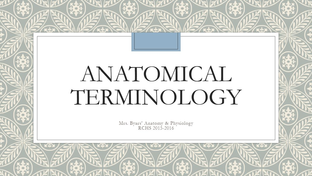anatomy terminology Experience during anatomical dissection in terms of visual and clinical  application whilst gaining anatomy understanding and skill students with prior.