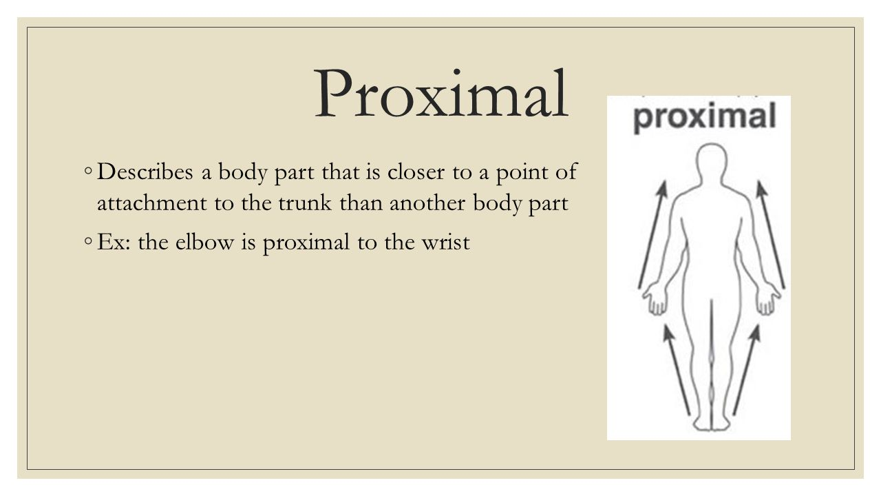 Definition of proximal in anatomy