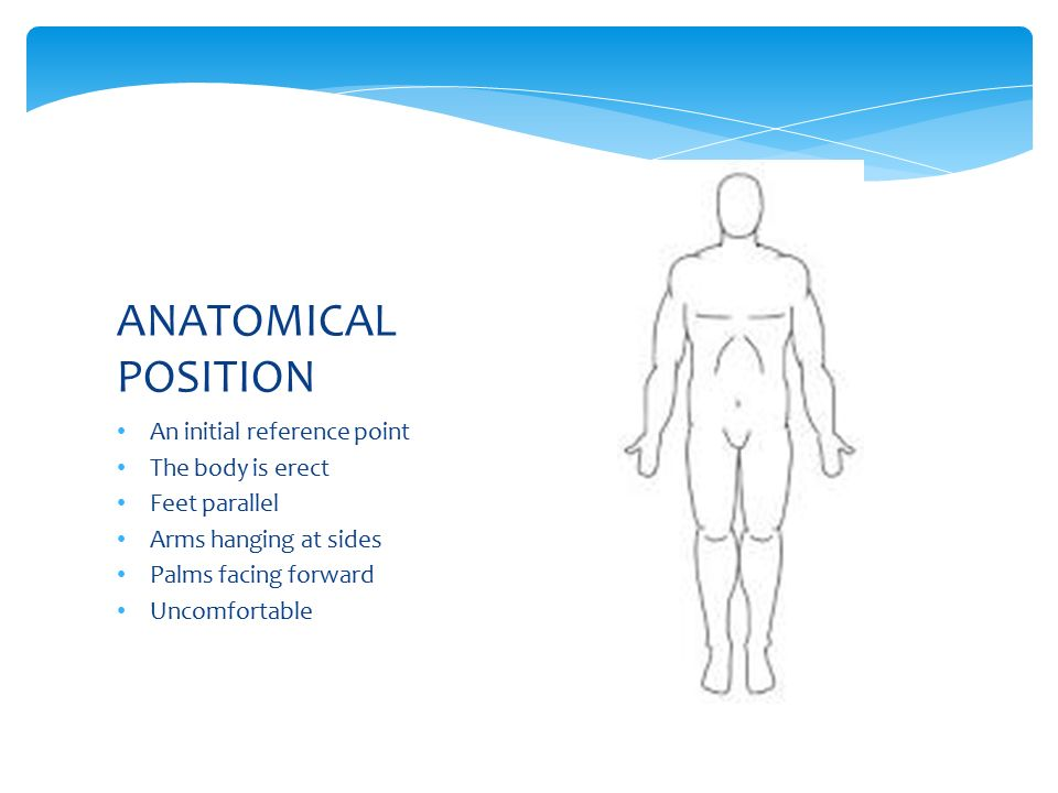 The Language of Anatomy anatomical position and 3068357 ...