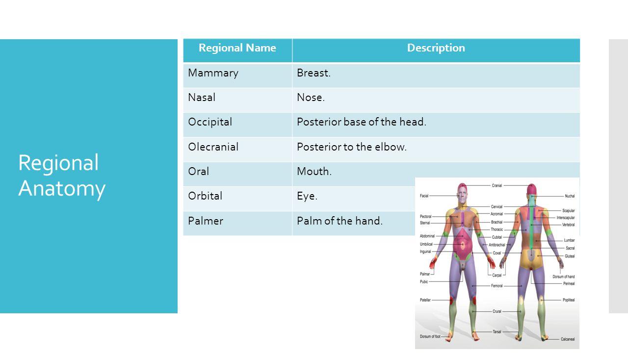 sports medicine standard 2 ppt video online download