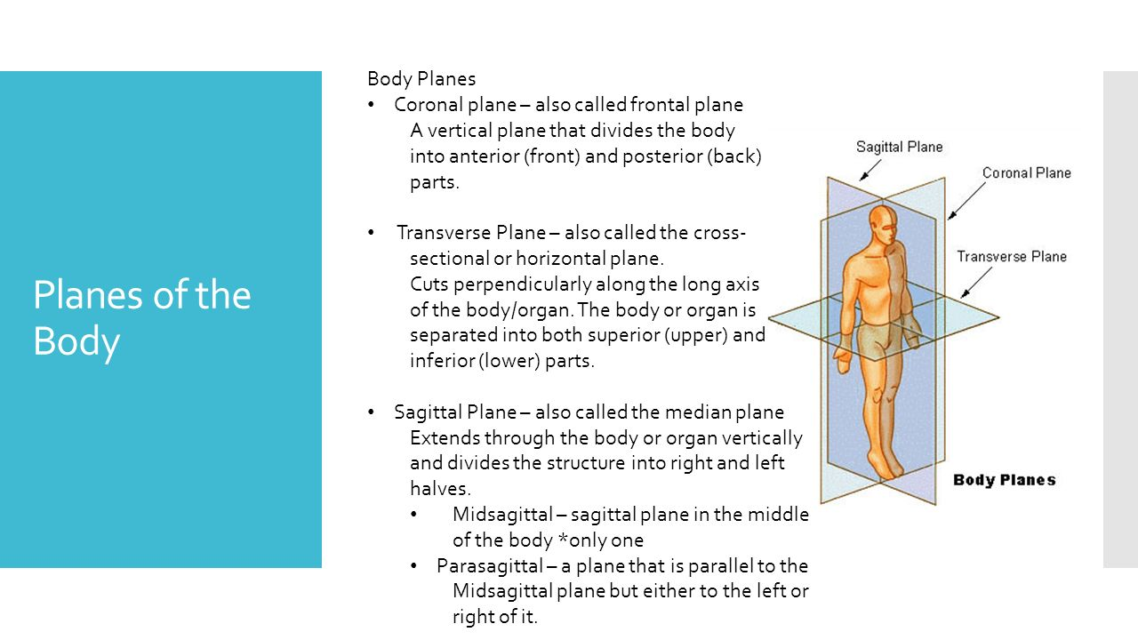 Sagittal plane definition anatomy 8244508 - follow4more.info
