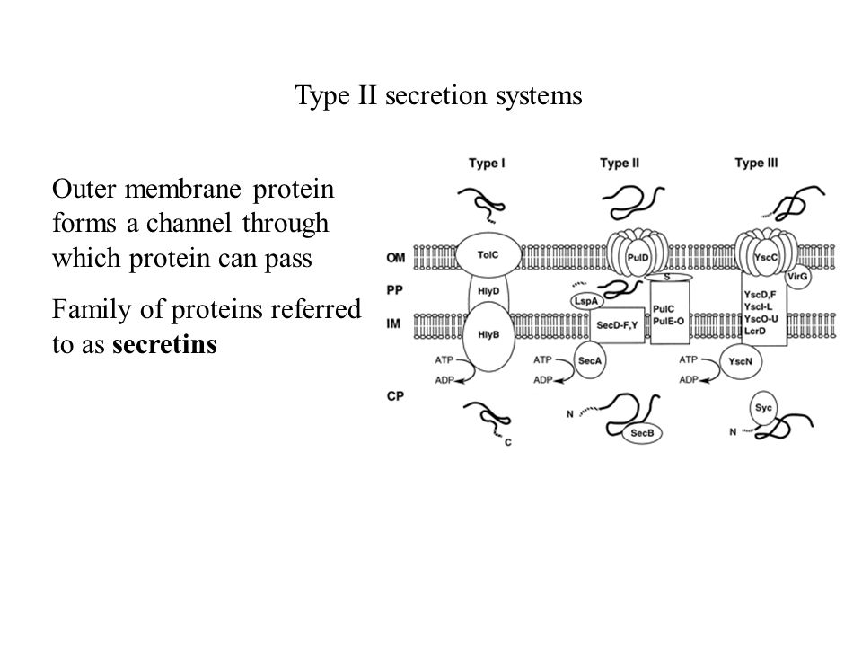 Type II secretion systems