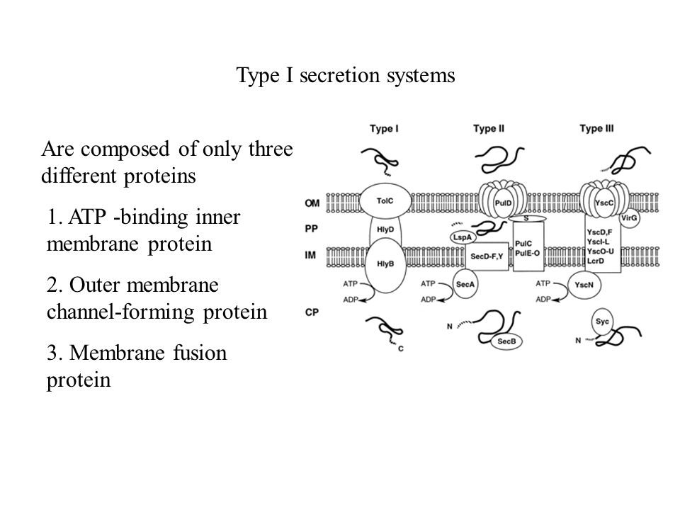 Type I secretion systems