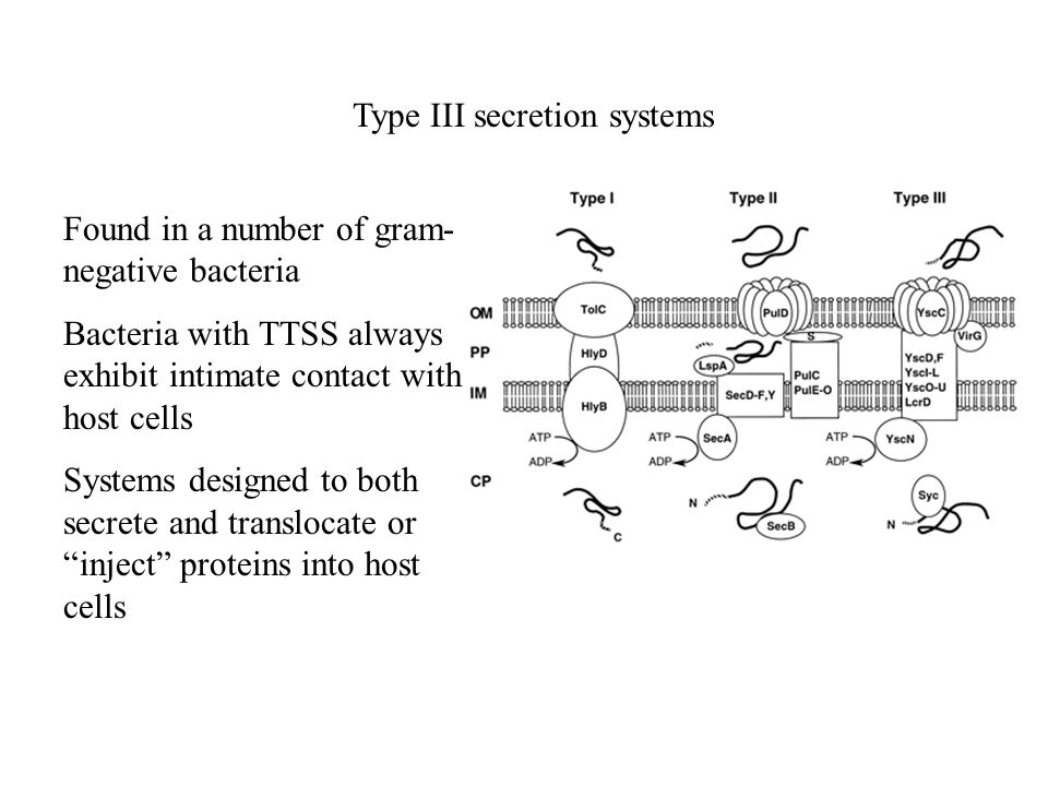 Type III secretion systems