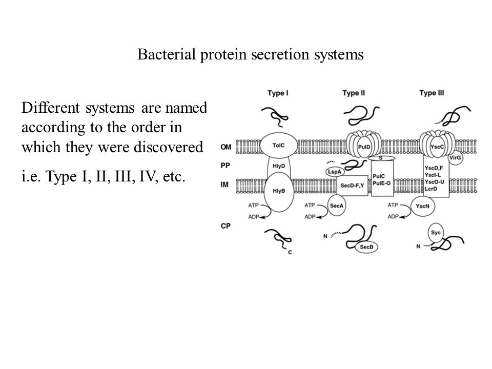 Bacterial protein secretion systems