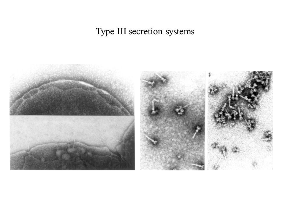 Type III secretion systems