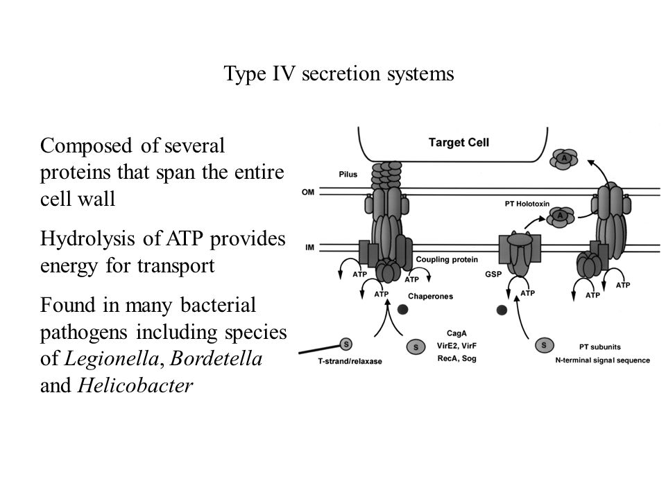 Type IV secretion systems