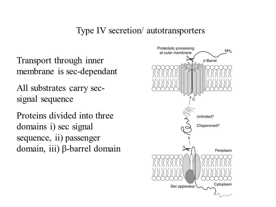 Type IV secretion/ autotransporters