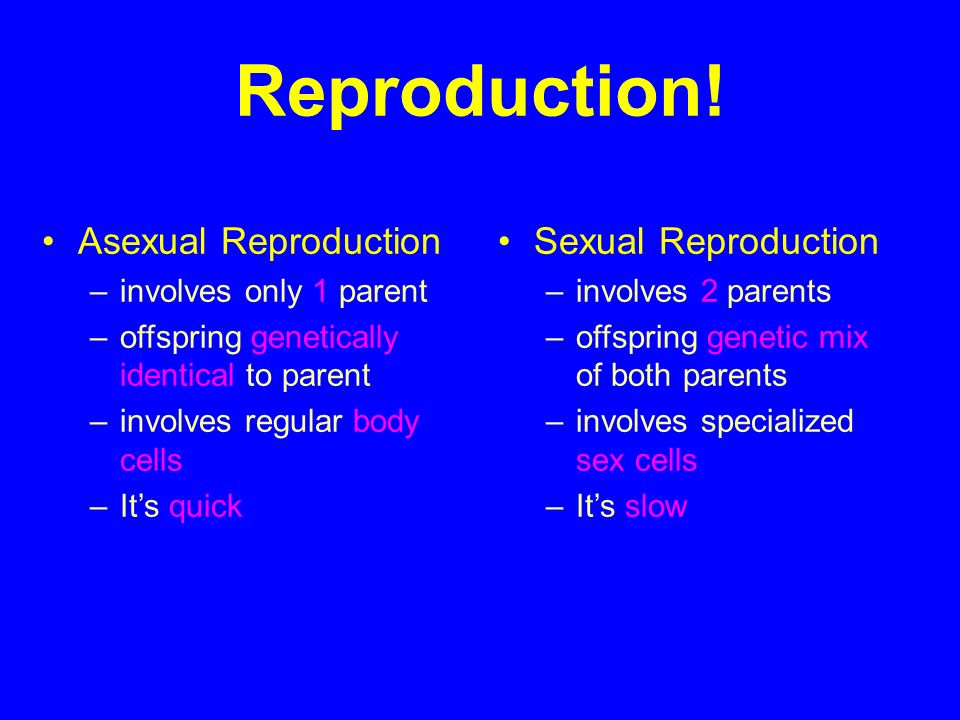 What does asexual reproduction involve