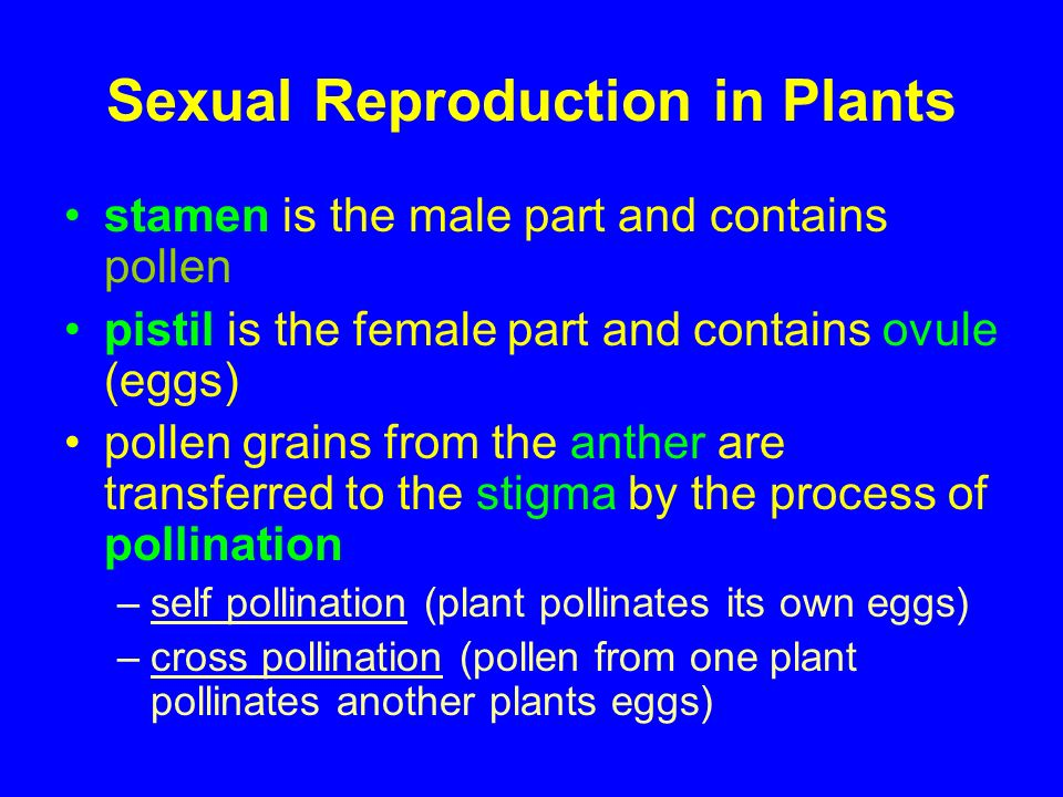 Sexual And Asexual Reproduction In Plants Ppt