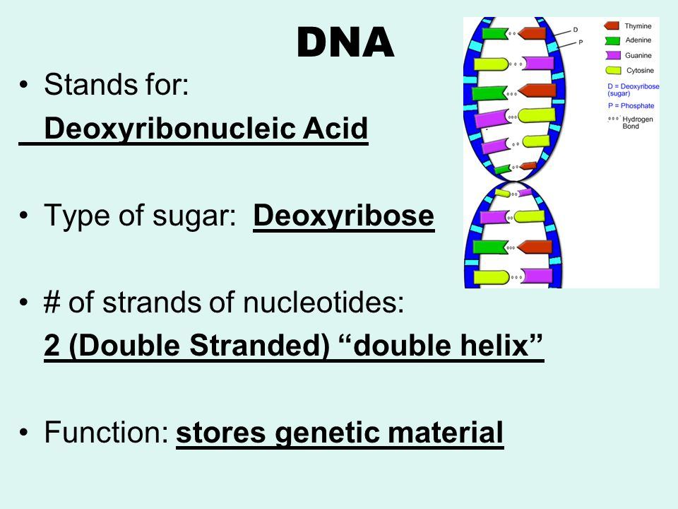 Dna the blueprint of life ppt video online download 3 dna malvernweather Gallery