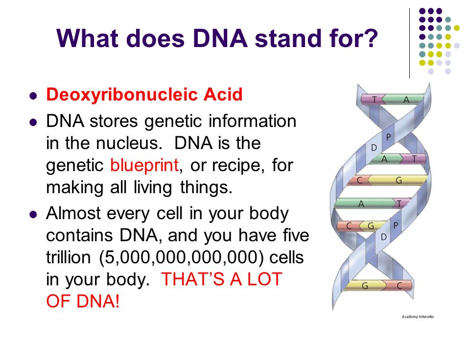 Dna ppt video online download what does dna stand for deoxyribonucleic acid malvernweather Choice Image