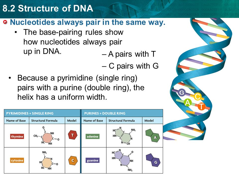key concept dna structure is the same in all organisms
