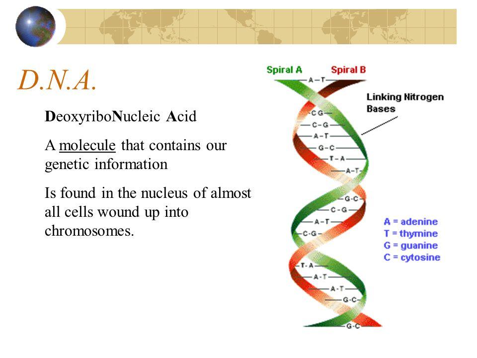 D.N.A. DeoxyriboNucleic Acid