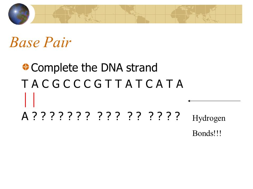 Base Pair Complete the DNA strand T A C G C C C G T T A T C A T A