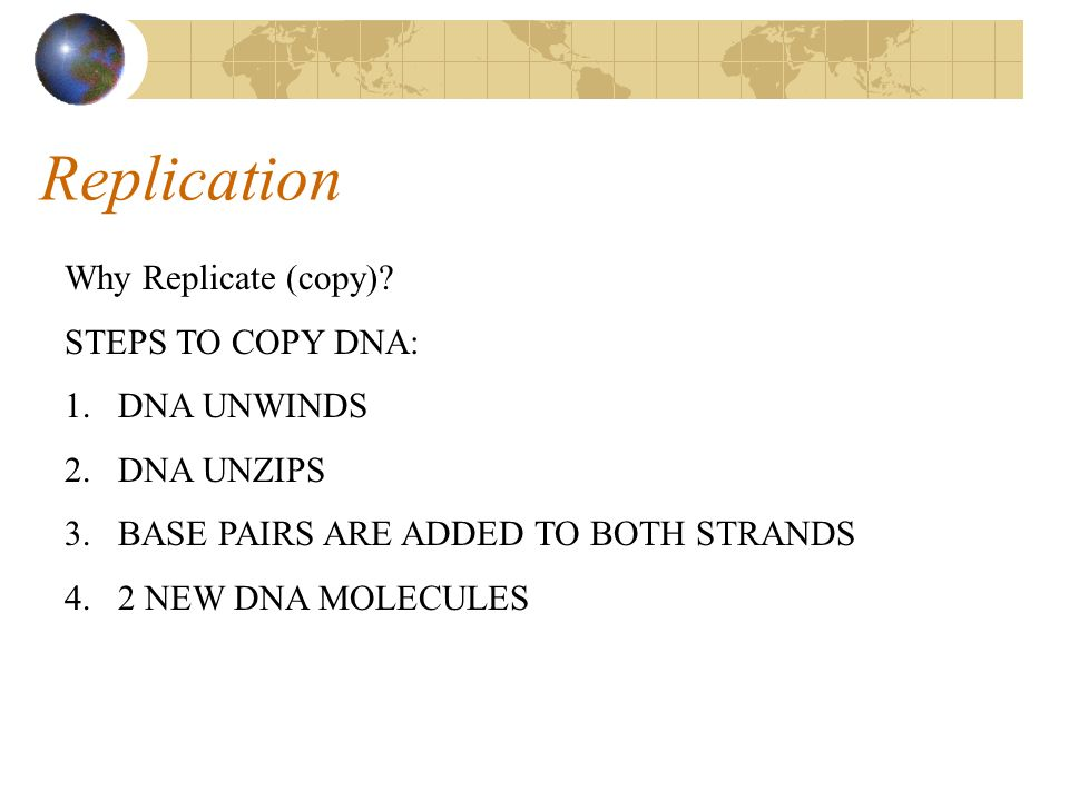 Replication Why Replicate (copy) STEPS TO COPY DNA: DNA UNWINDS