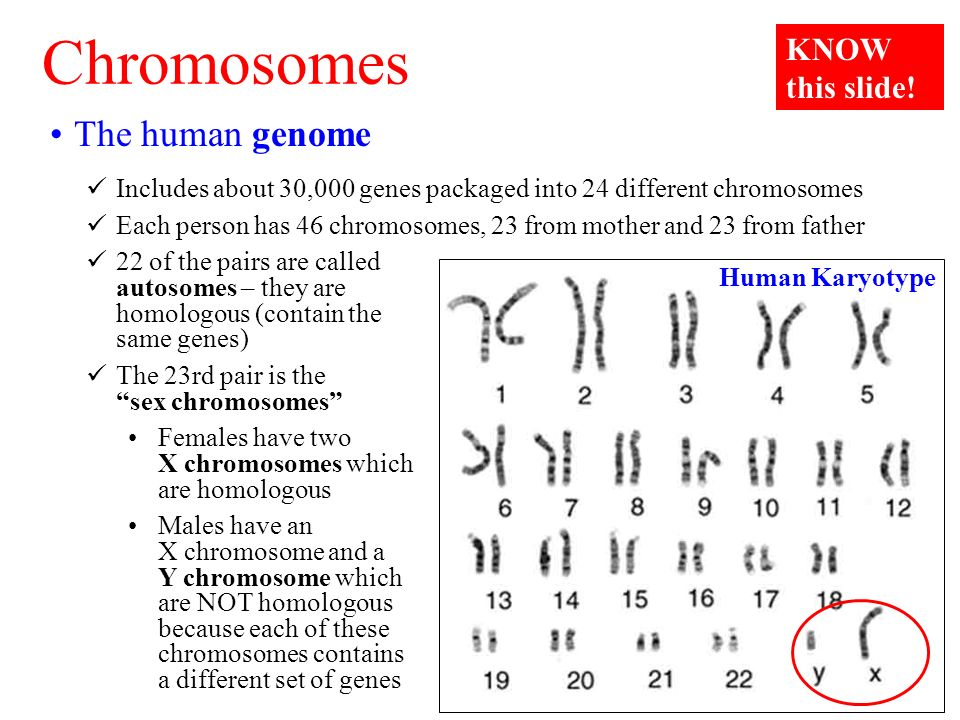 Chromosomes that are not sex chromosomes are called images 41