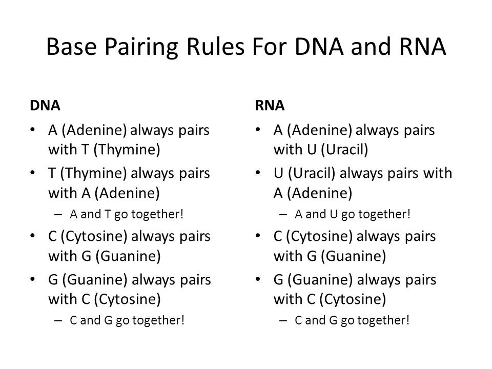 Dna vs rna and protein synthesis worksheet
