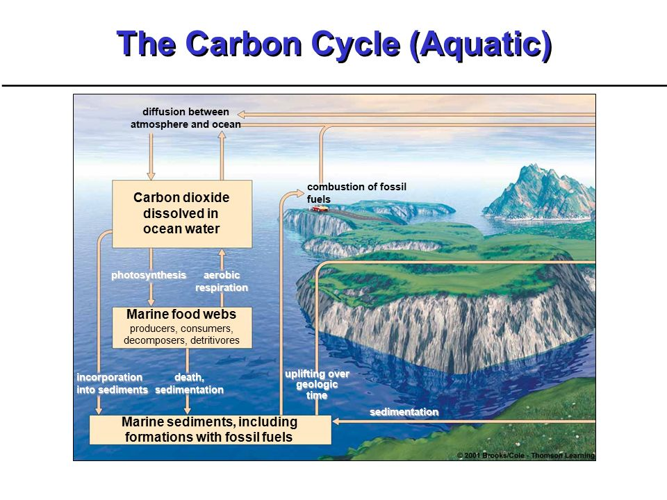 Nutrient cycles ppt video online download the carbon cycle aquatic ccuart Image collections