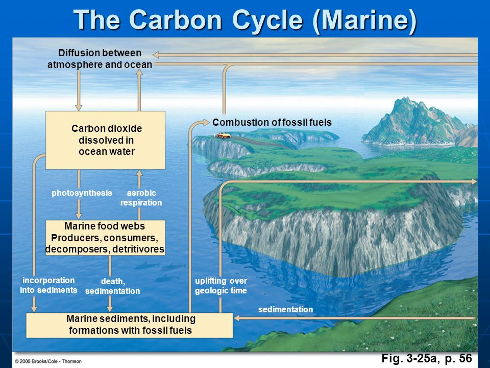 The Carbon Cycle (Marine)