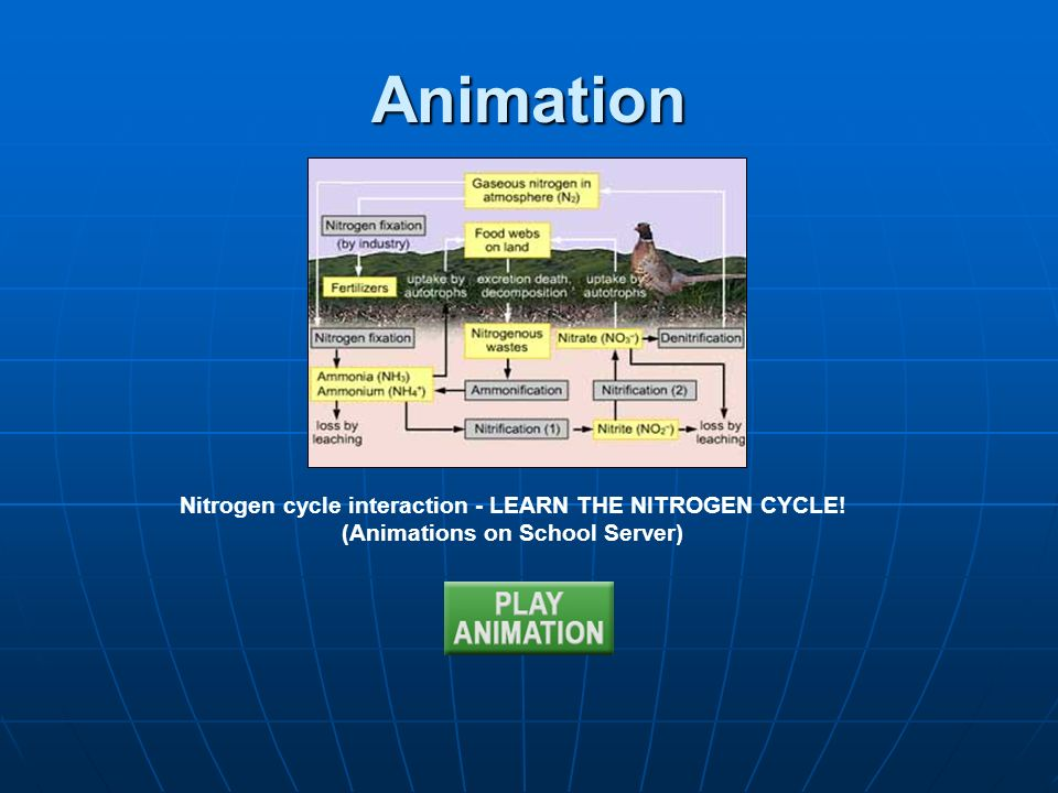 Animation Nitrogen cycle interaction - LEARN THE NITROGEN CYCLE!
