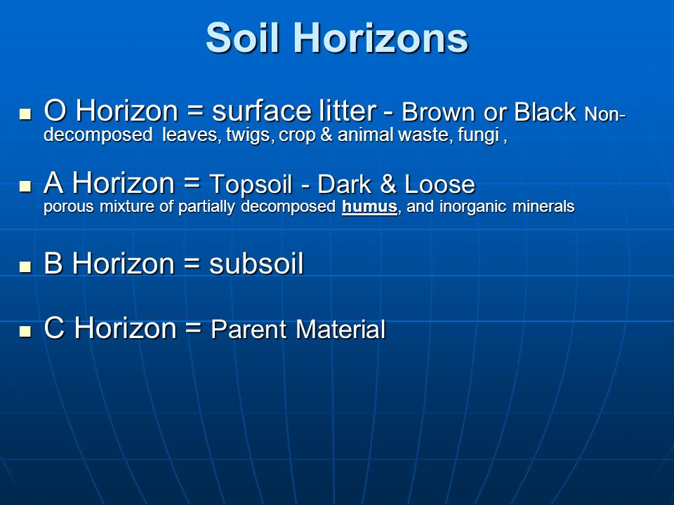 Soil Horizons O Horizon = surface litter - Brown or Black Non-decomposed leaves, twigs, crop & animal waste, fungi ,