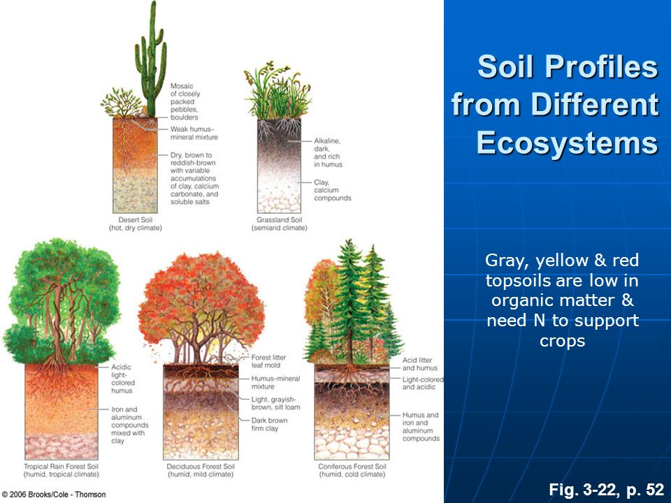 Soil Profiles from Different Ecosystems