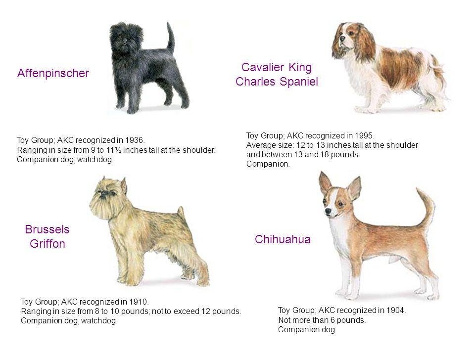 American Kennel Club S...