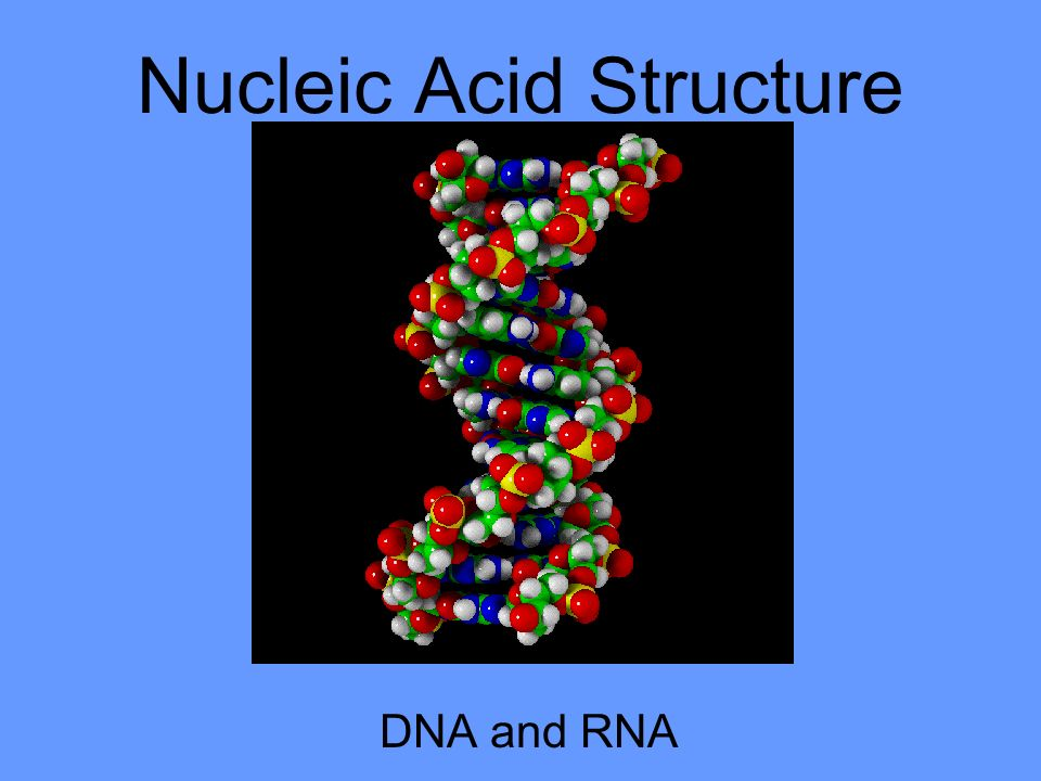 structure of nucleic acid pdf
