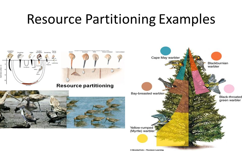 Ch 6 Population Ecology Ppt Video Online Download