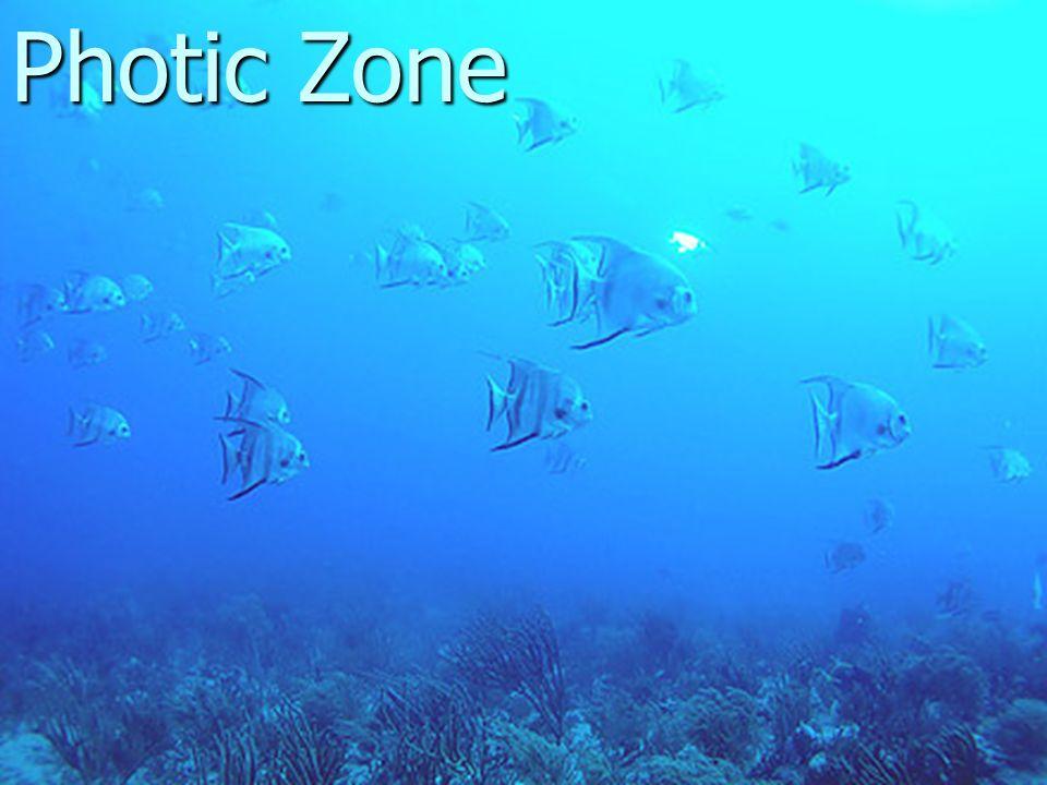 aquatic ecology notes ppt download