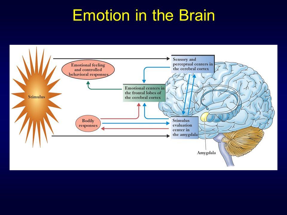 cerebral cortex and phineas gage O caso de phineas gage foi um marco histórico na neurociência a lesão cerebral acidental que sofreu e as suas consequências cortex pré-frontal, lobo pr.
