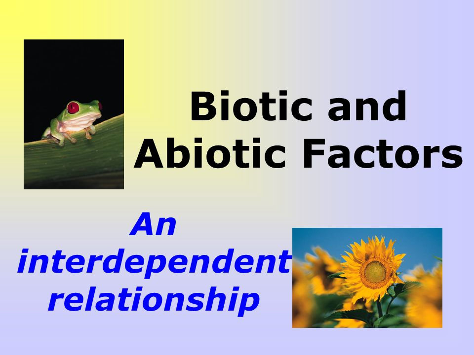 relationship of abiotic and biotic factors