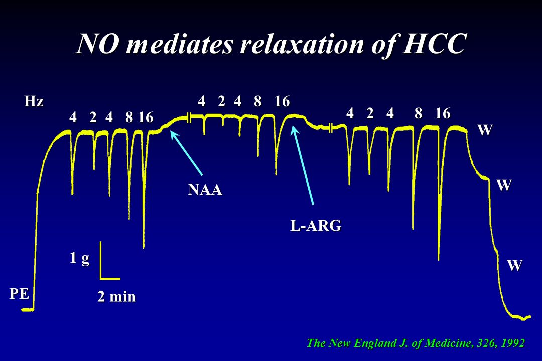 NO mediates relaxation of HCC