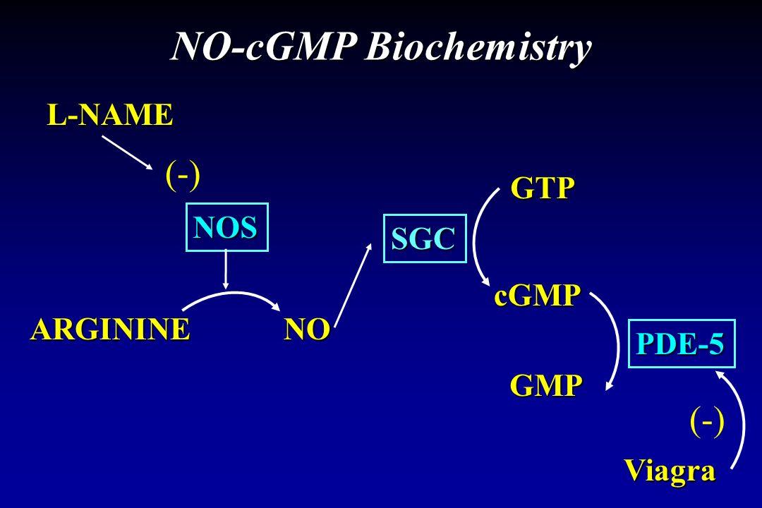 NO-cGMP Biochemistry (-) (-) L-NAME GTP NOS SGC cGMP ARGININE NO PDE-5