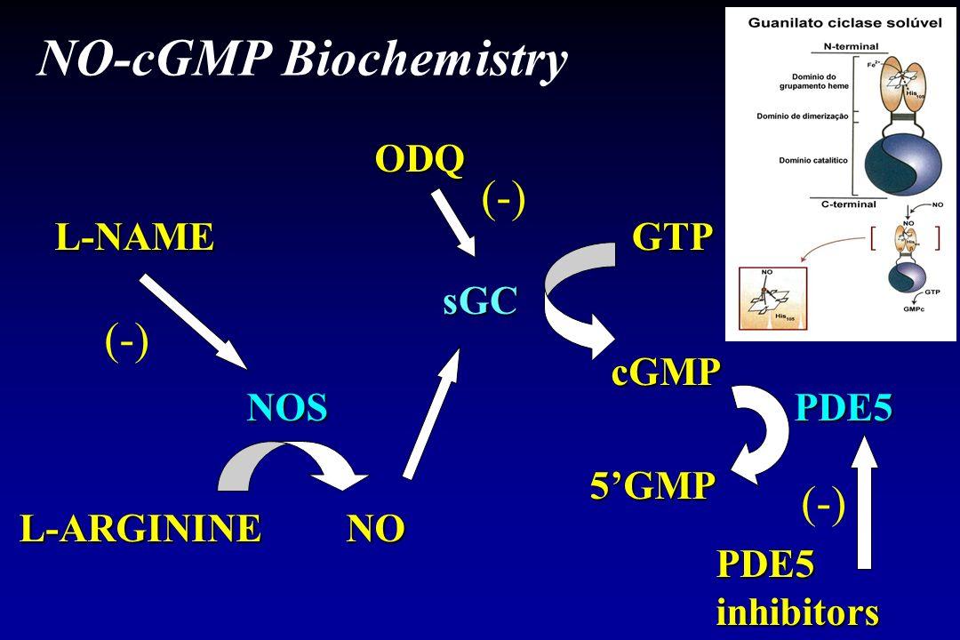NO-cGMP Biochemistry (-) (-) (-) ODQ L-NAME GTP sGC cGMP NOS PDE5