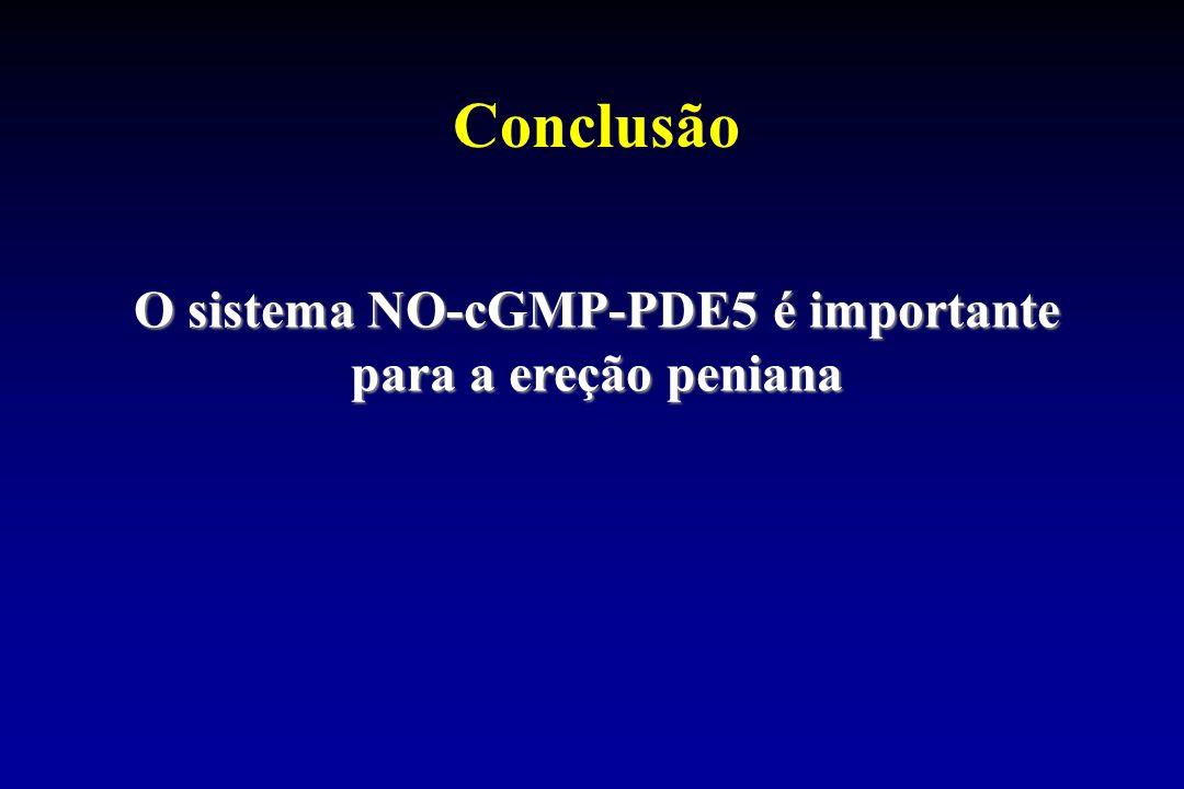 O sistema NO-cGMP-PDE5 é importante para a ereção peniana