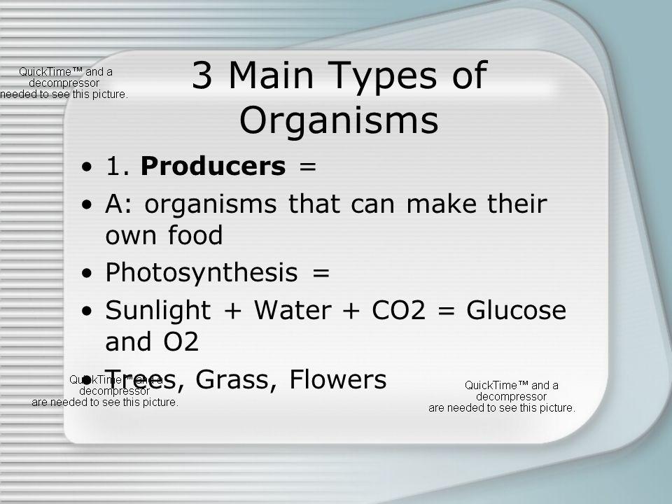 3 Main Types of Organisms