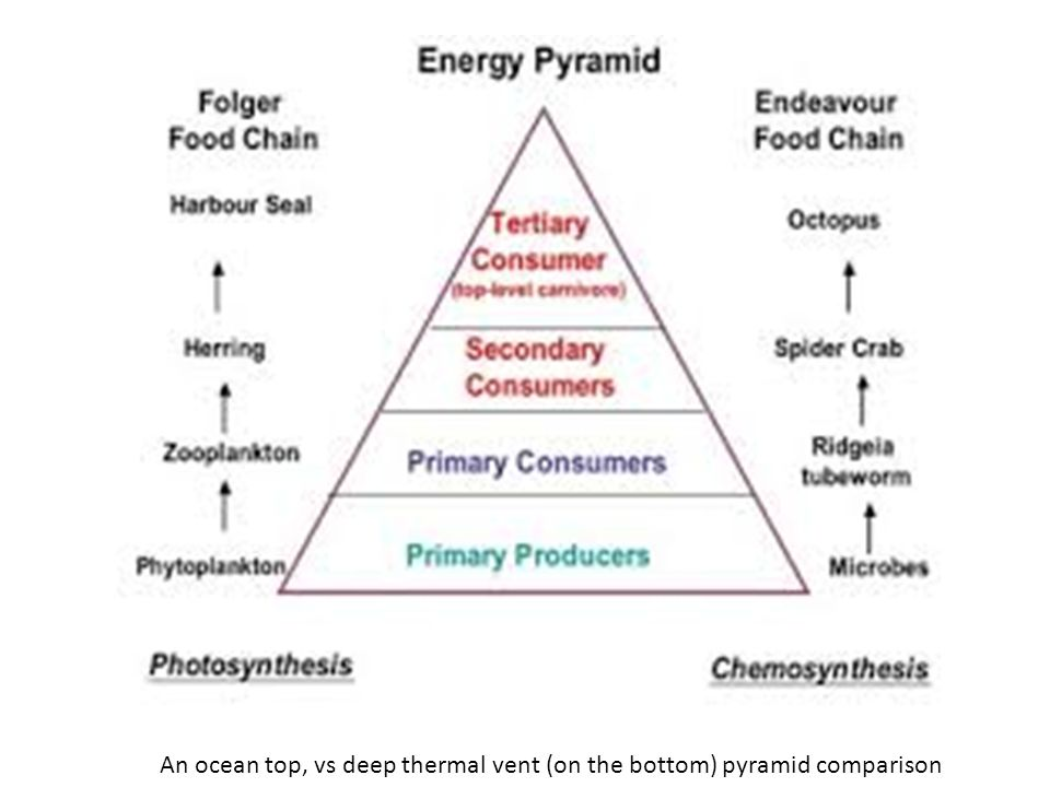 the bottom of the pyramid strategy Building a strategy pyramid  it was strategic alignment, or the lack of it, that led me to develop the strategy pyramid back in the mid-'80s.